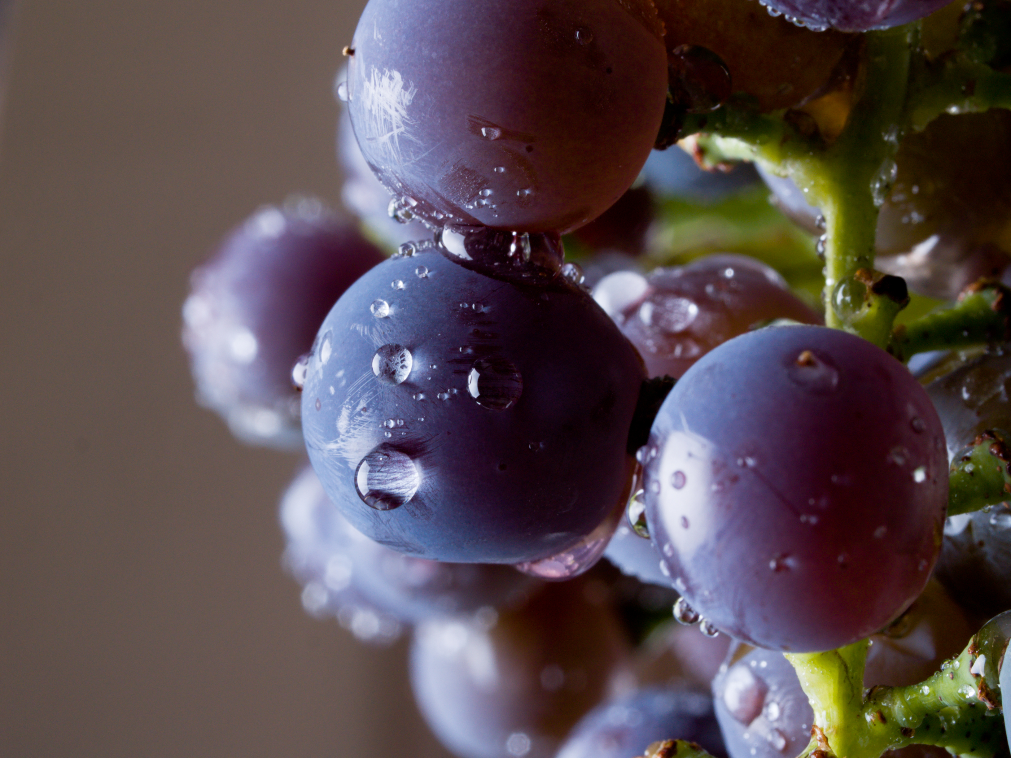 too-much-rain-and-champagne-grapes